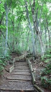 夏山登山道2合目付近の木道が美しかった
